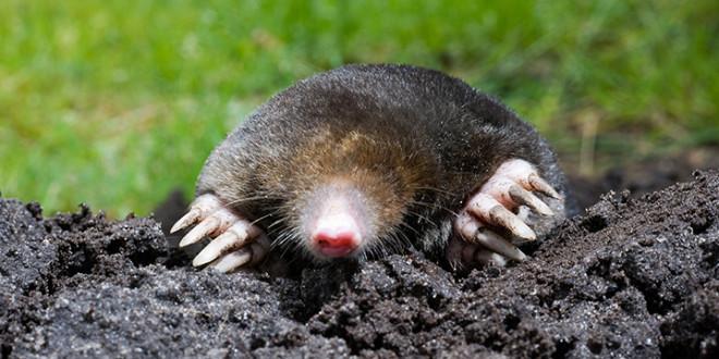 mole removal richmond va