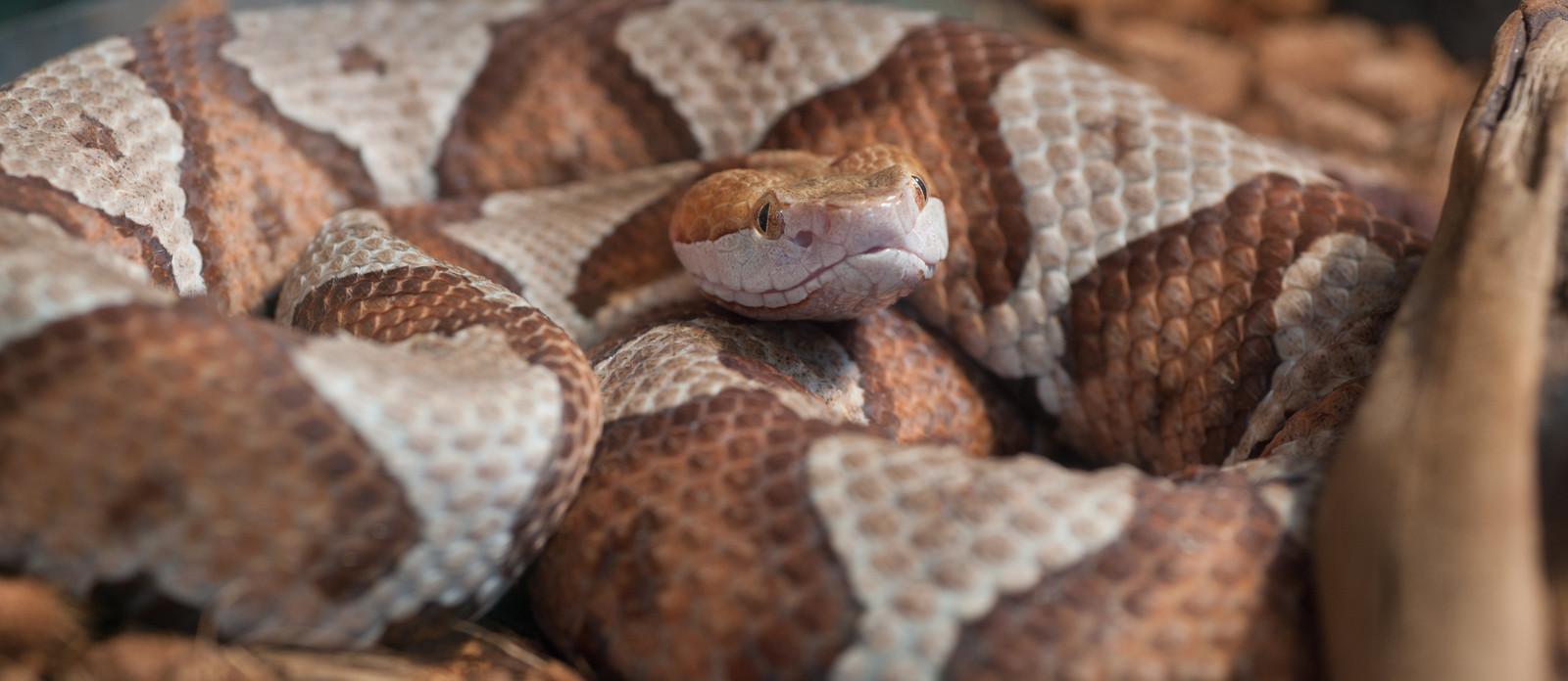 copperhead snake removal richmond va