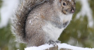 squirrel removal richmond va