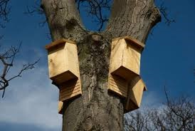 bat houses - bat removal in richmond